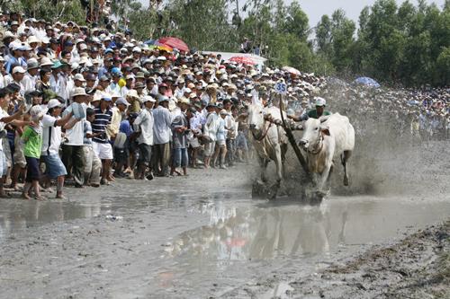 Ấn tượng với  lễ hội đua bò ở Indonesia