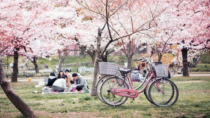 Lễ hội Hanami Nhật Bản
