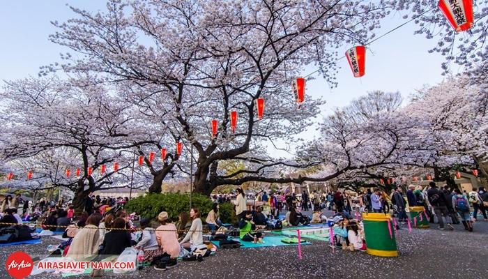 Lễ hội Hanami