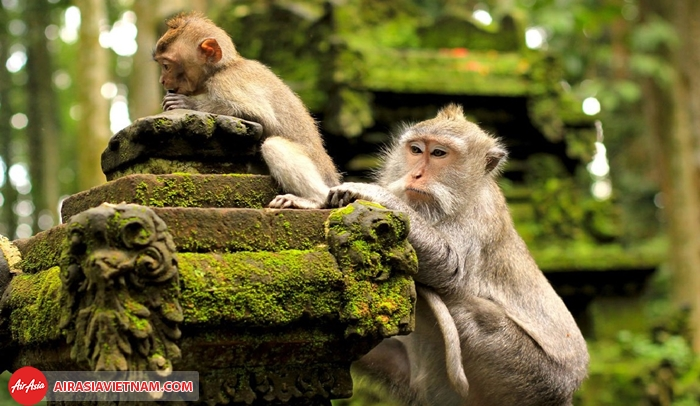 Khu rừng khỉ Ubud