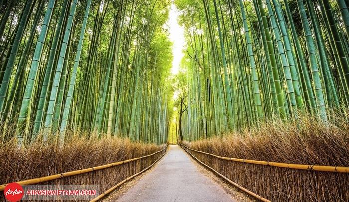 Rừng tre Sagano Kyoto