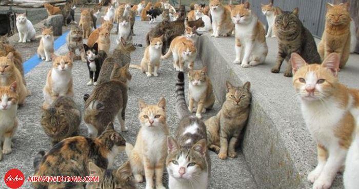 Đảo Tashirojima sẽ khiến du khách vô cùng bất ngờ với số lượng mèo cực lớn