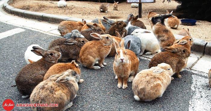Có rất nhiều hòn đảo độc đáo ở Nhật Bản, như đảo thỏ - Okunoshima