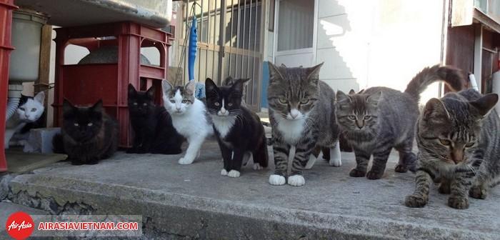 Đảo Aoshima – đảo mèo