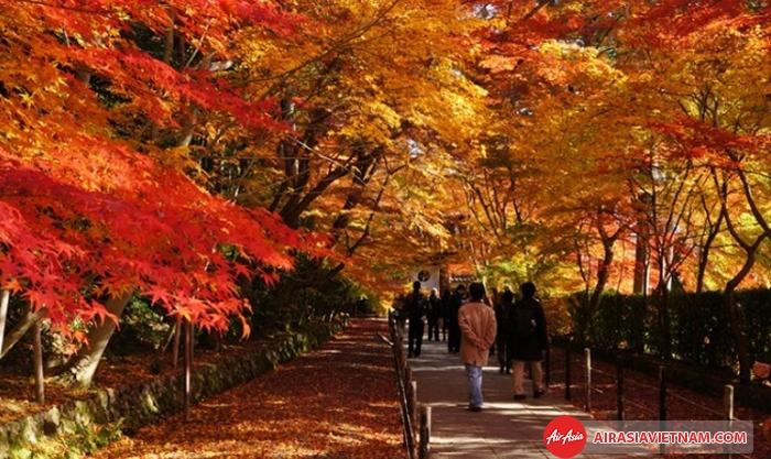 Những con đường được nhuộm đỏ lá phong tại Nhật Bản