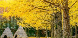 Du lịch mùa thu và những điểm đến đẹp nhất châu Á